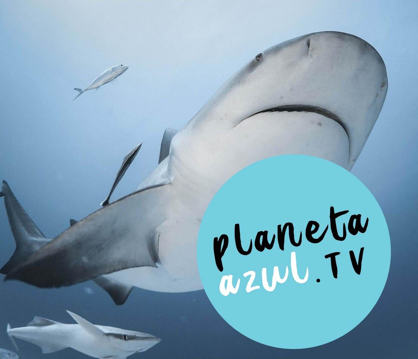 Banner home Planeta Azul Pagina 1